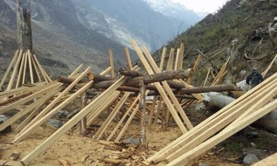 Samaritan's Purse hopes to use all the trees uprooted by the earthquake for lumber for rebuilding.