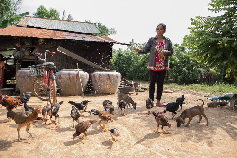 Pha learned how to raise healthy chickens that can sell in the local market.