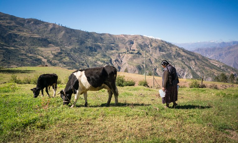 Dairy projects in Bolivia are helping local people and opening doors for sharing the Gospel of Jesus Christ.