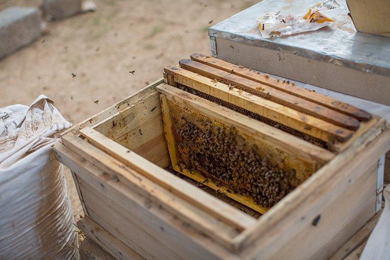 God used bees to help restore hope to Kameela.