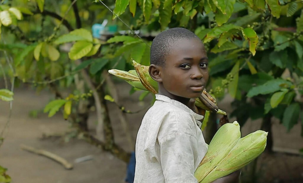 Through agriculture programmes, disabled residents in eastern DRC are learning more effective growing techniques.